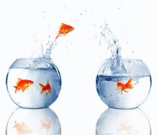 20131130190645-peces-nadando-en-el-agua-de-las-peceras.jpg